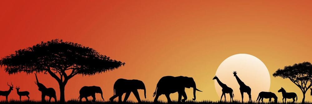 Papier Peint Panoramique pour enfants avec des animaux