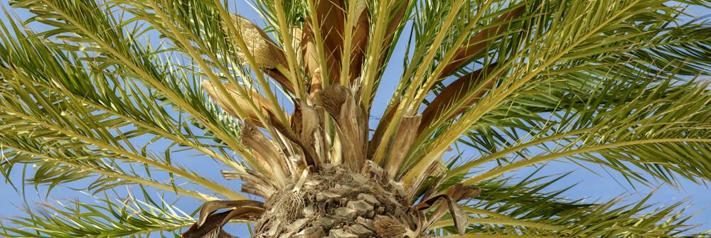 Papier Peint Panoramique palmier