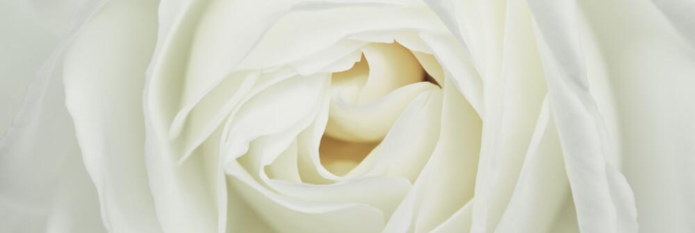 Papier Peint Panoramique roses