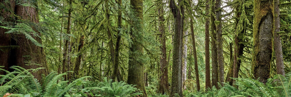 Wallexclusive Premium Forests