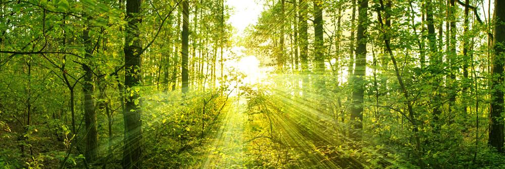 Papier Peint Panoramique soleil