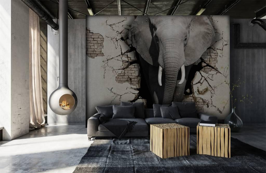 Animaux - L'éléphant en 3D depuis le mur - Chambre d'adolescent 6