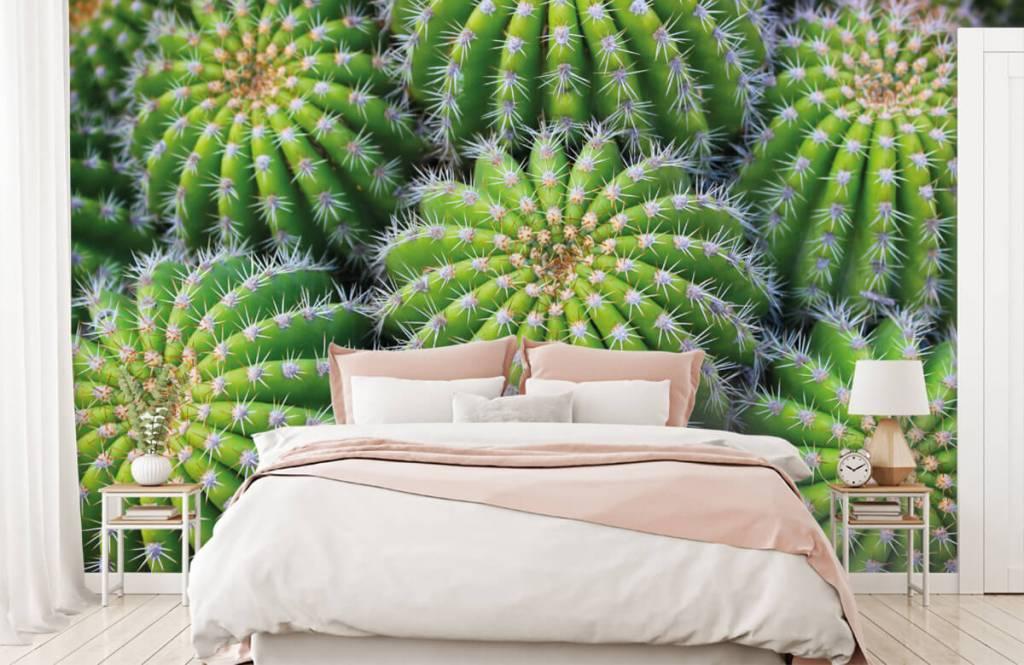 Cactus - Cacti - Chambre d'adolescent 1