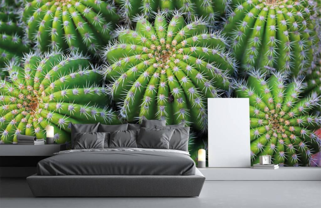 Cactus - Cacti - Chambre d'adolescent 2