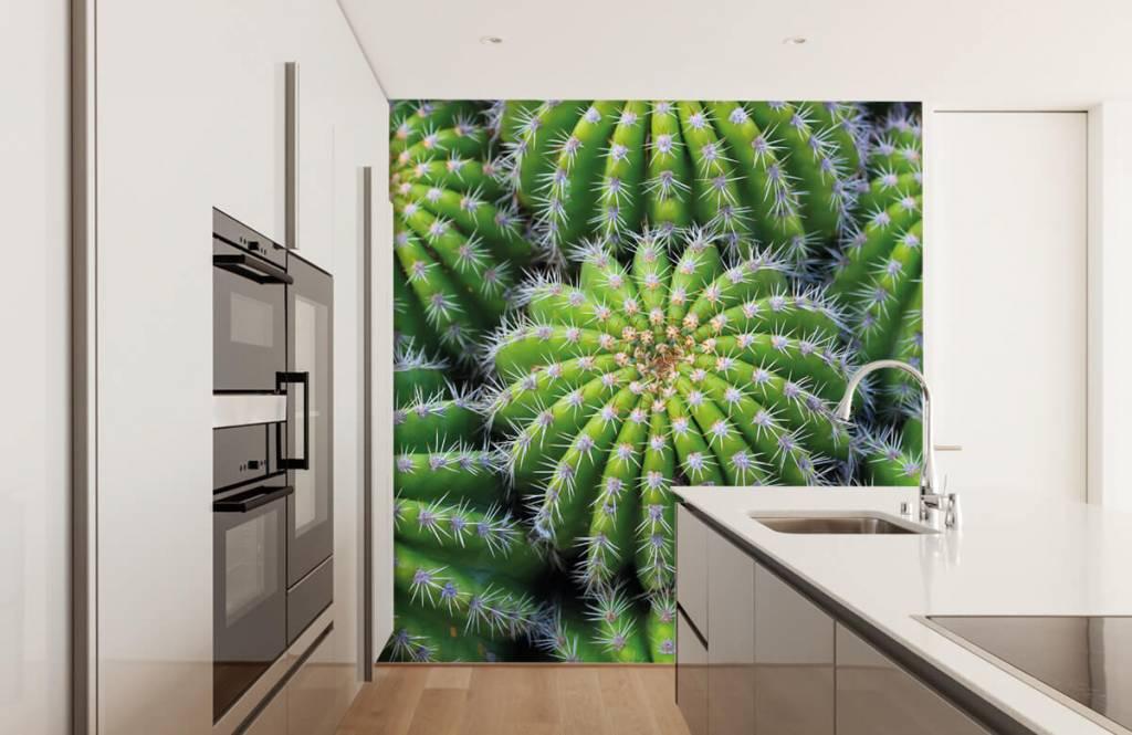 Cactus - Cacti - Chambre d'adolescent 3