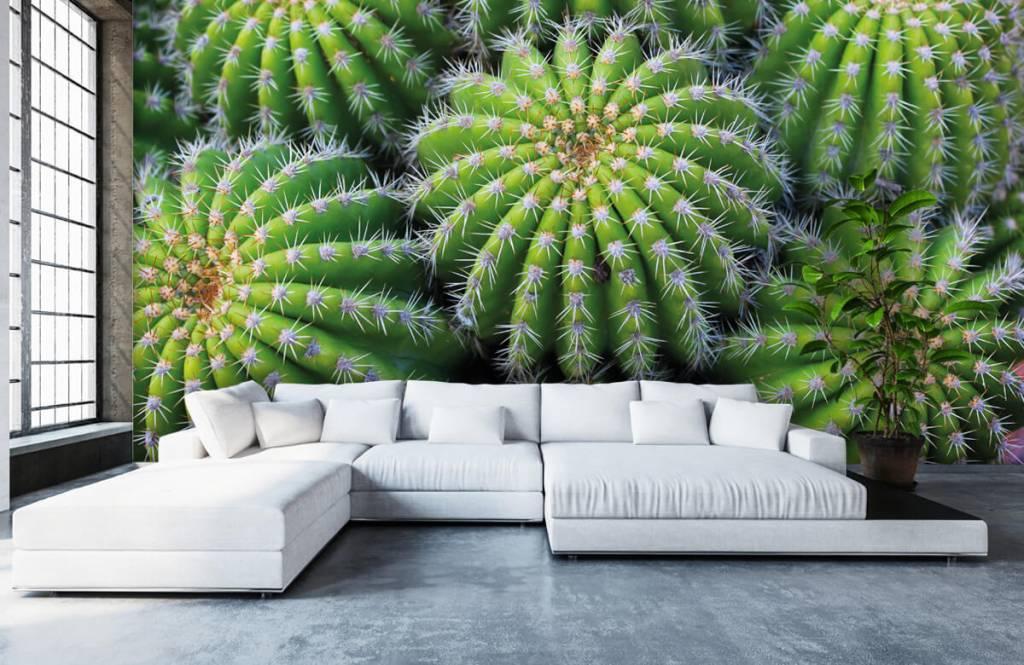 Cactus - Cacti - Chambre d'adolescent 5