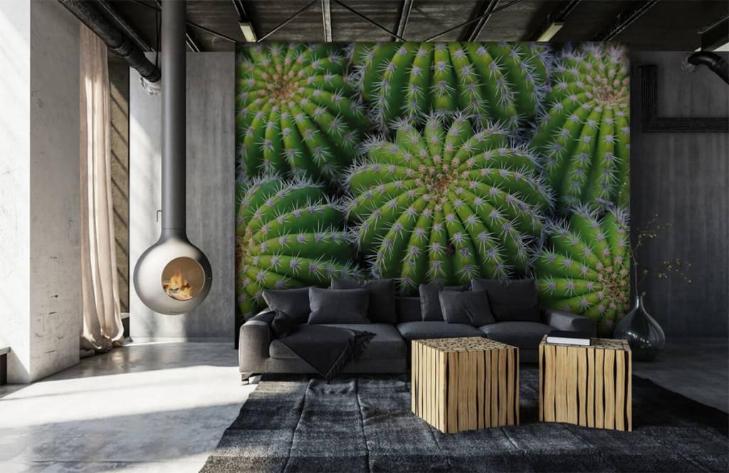 Cactus - Cacti - Chambre d'adolescent 6