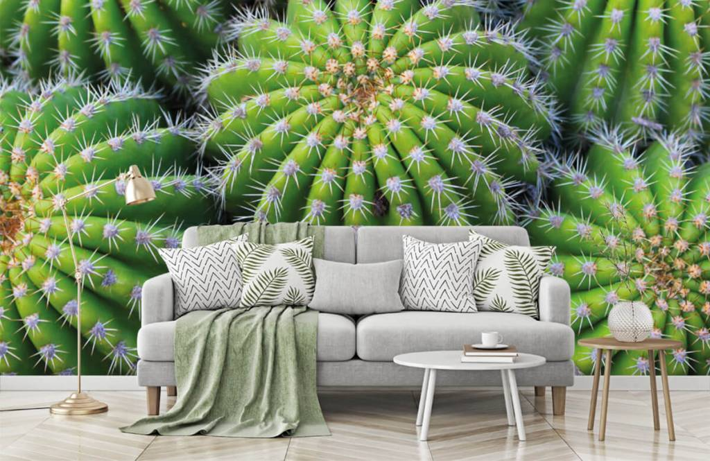 Cactus - Cacti - Chambre d'adolescent 7