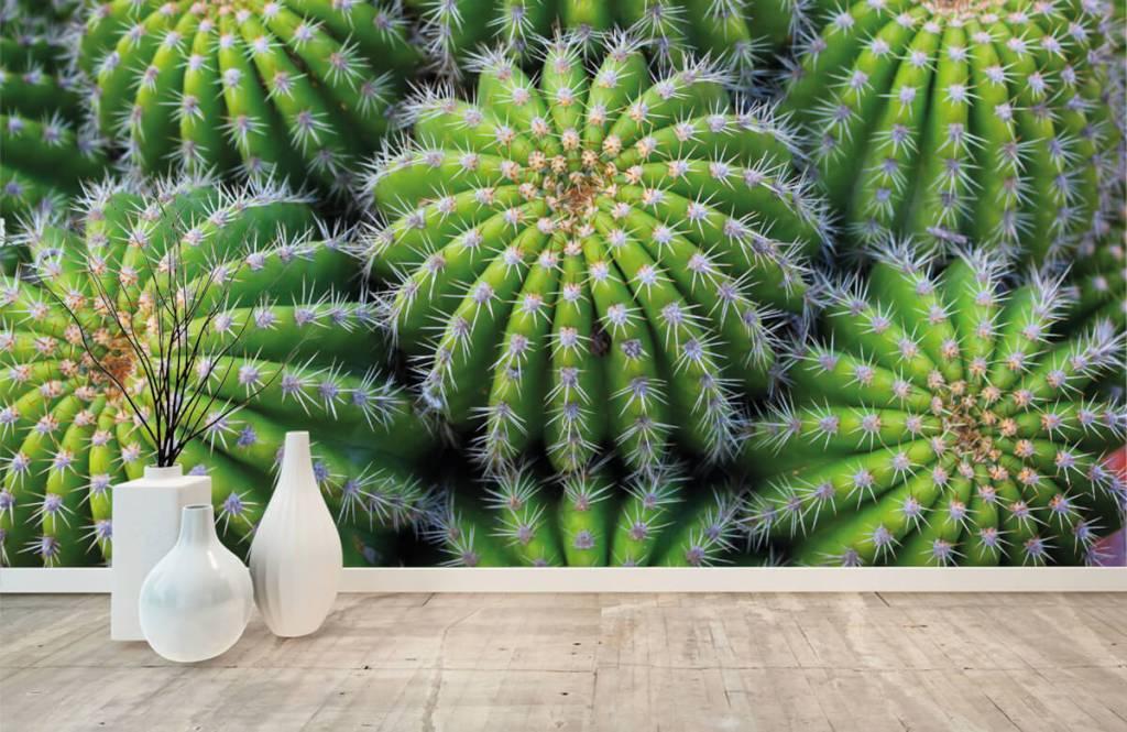 Cactus - Cacti - Chambre d'adolescent 8