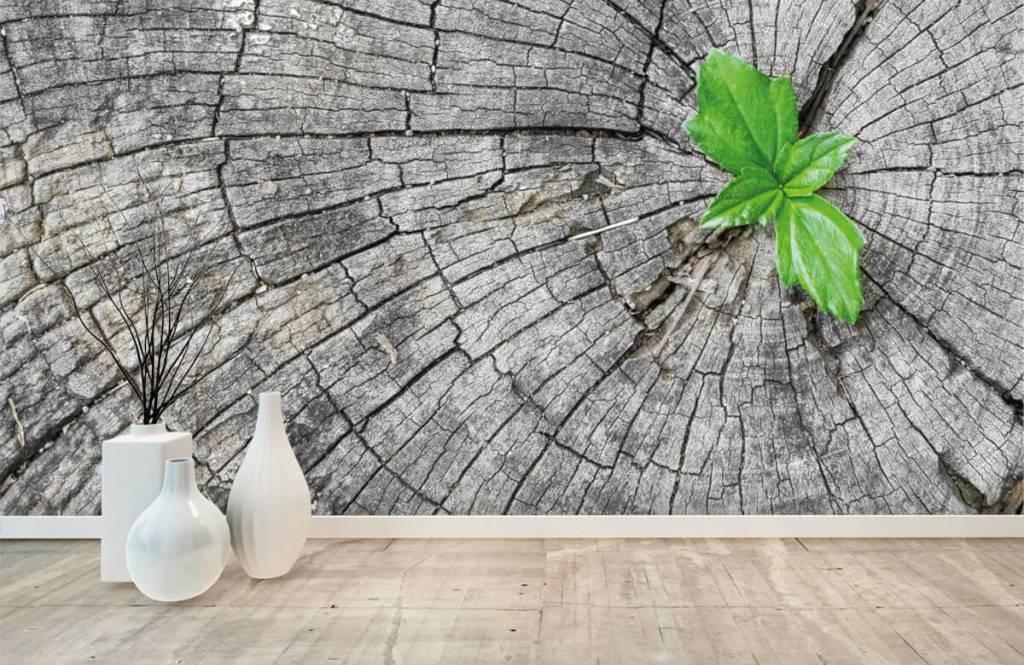 Papier peint bois - Diamètre d'un tronc d'arbre - Chambre à coucher 1
