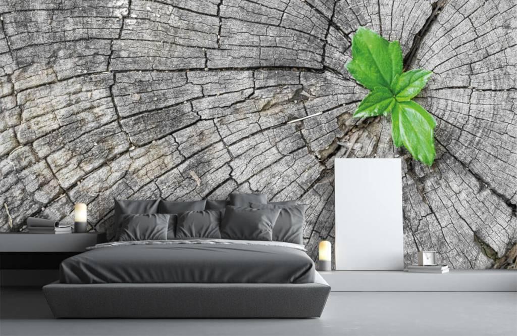 Papier peint bois - Diamètre d'un tronc d'arbre - Chambre à coucher 5