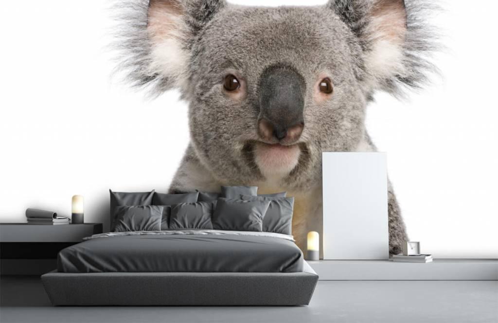 Autre - Photo d'un koala - Chambre d'enfants 1