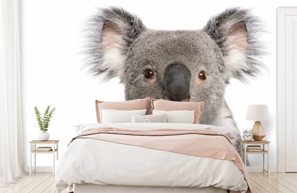 Autre - Photo d'un koala - Chambre d'enfants 2