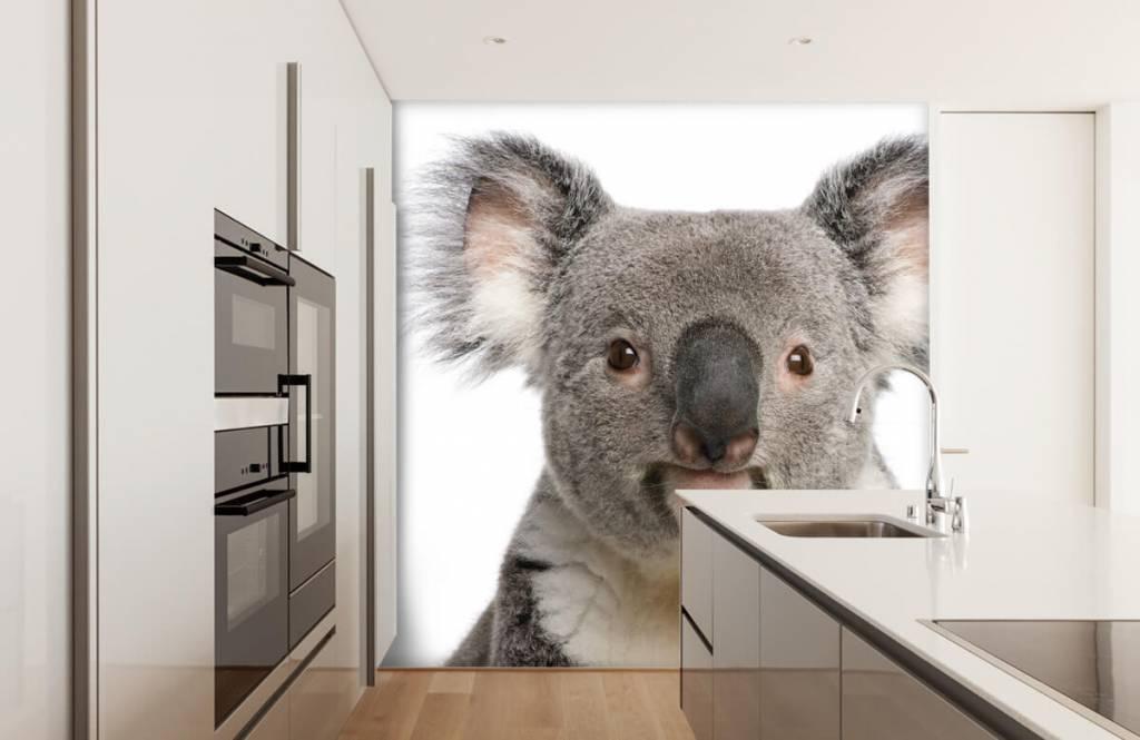 Autre - Photo d'un koala - Chambre d'enfants 3