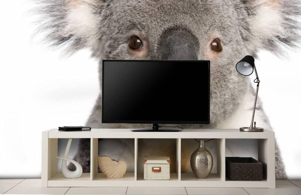 Autre - Photo d'un koala - Chambre d'enfants 4