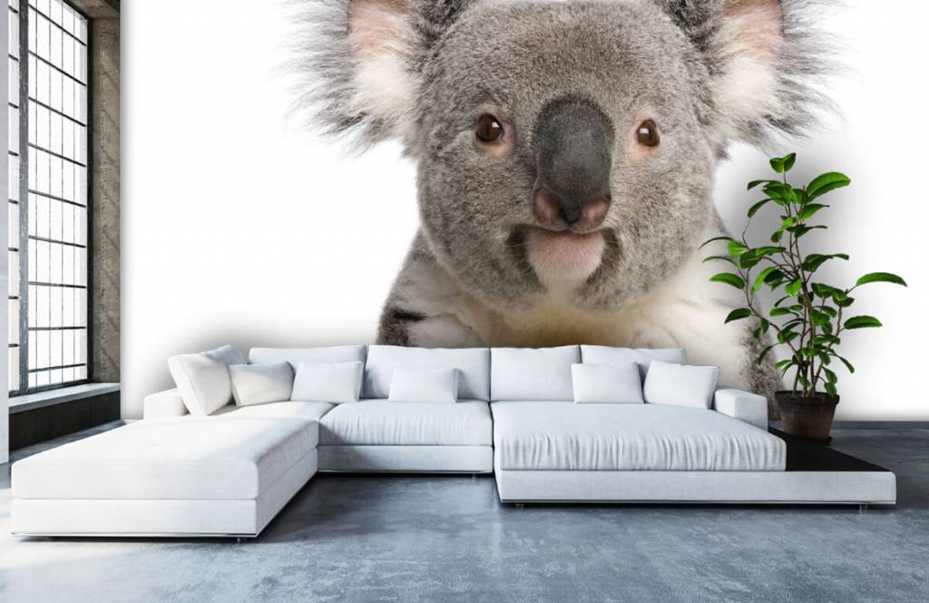 Autre - Photo d'un koala - Chambre d'enfants 5