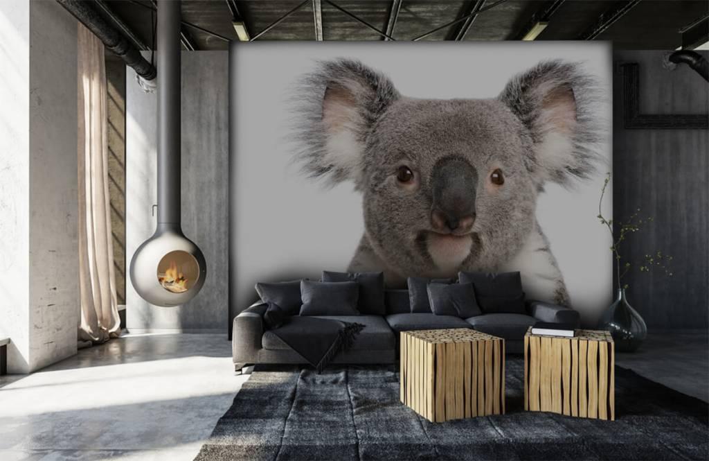 Autre - Photo d'un koala - Chambre d'enfants 6