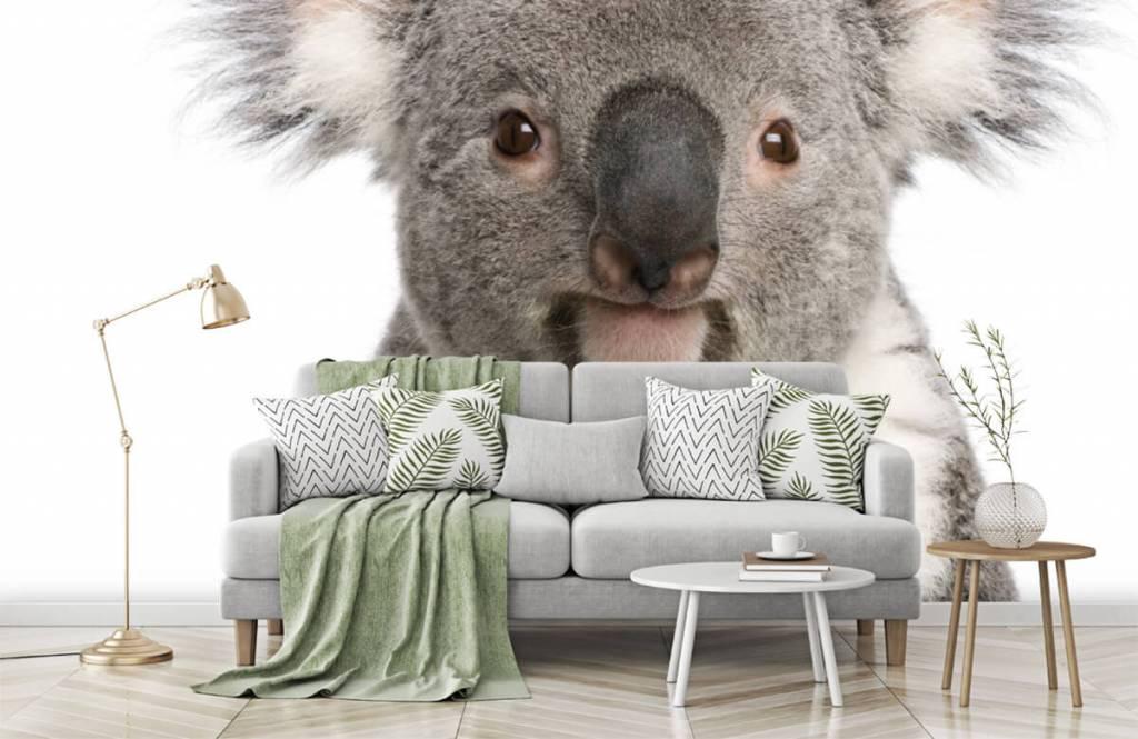 Autre - Photo d'un koala - Chambre d'enfants 7