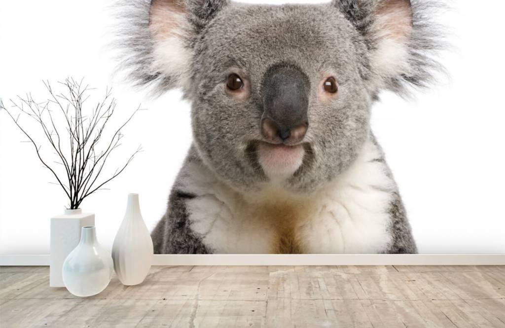Autre - Photo d'un koala - Chambre d'enfants 8