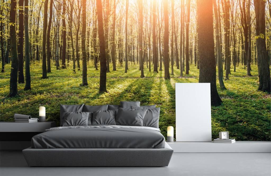 Papier peint de la forêt - Soleil du soir dans la forêt - Couloir 3