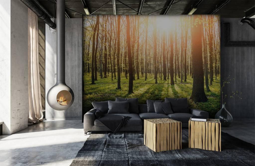 Papier peint de la forêt - Soleil du soir dans la forêt - Couloir 6