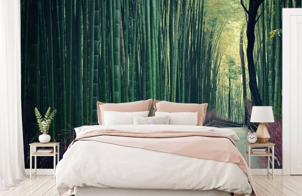 Papier peint de la forêt - Forêt de bambous - Hall d'entrée 1