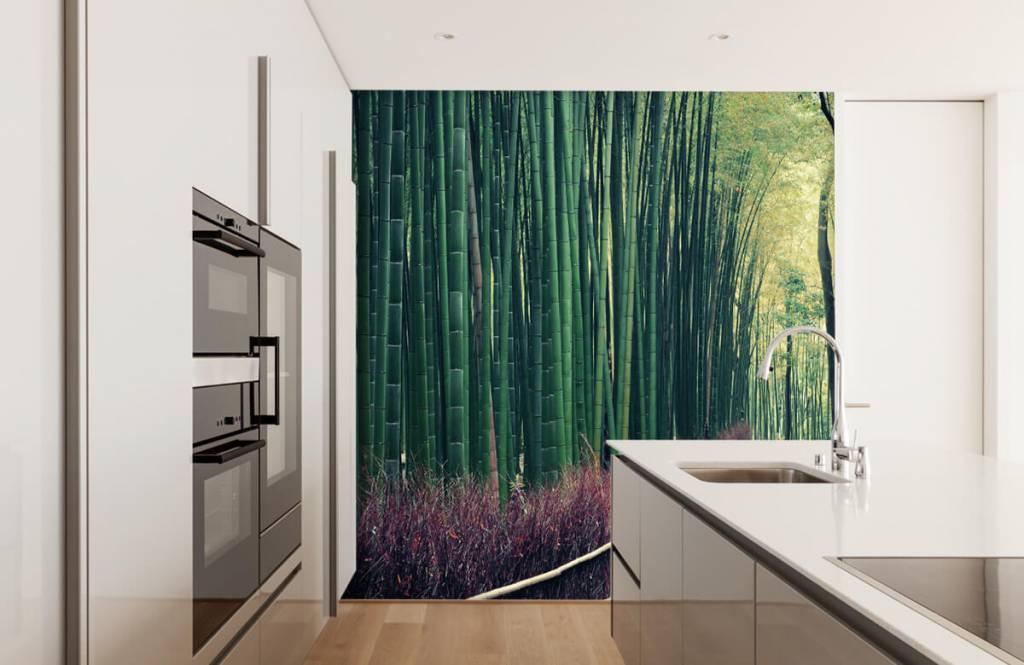 Papier peint de la forêt - Forêt de bambous - Hall d'entrée 3