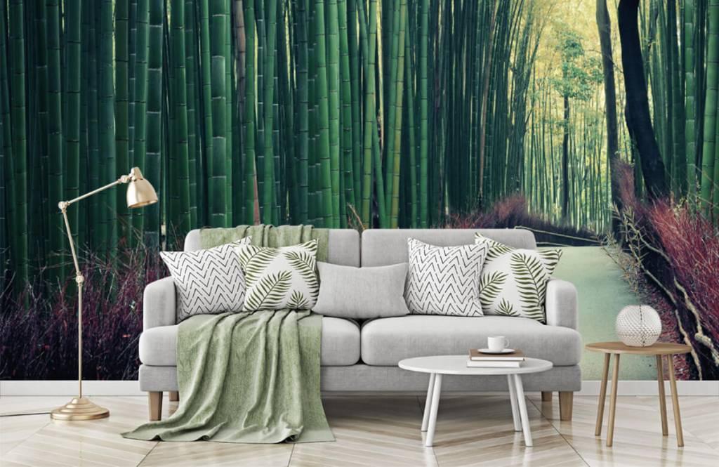 Papier peint de la forêt - Forêt de bambous - Hall d'entrée 7
