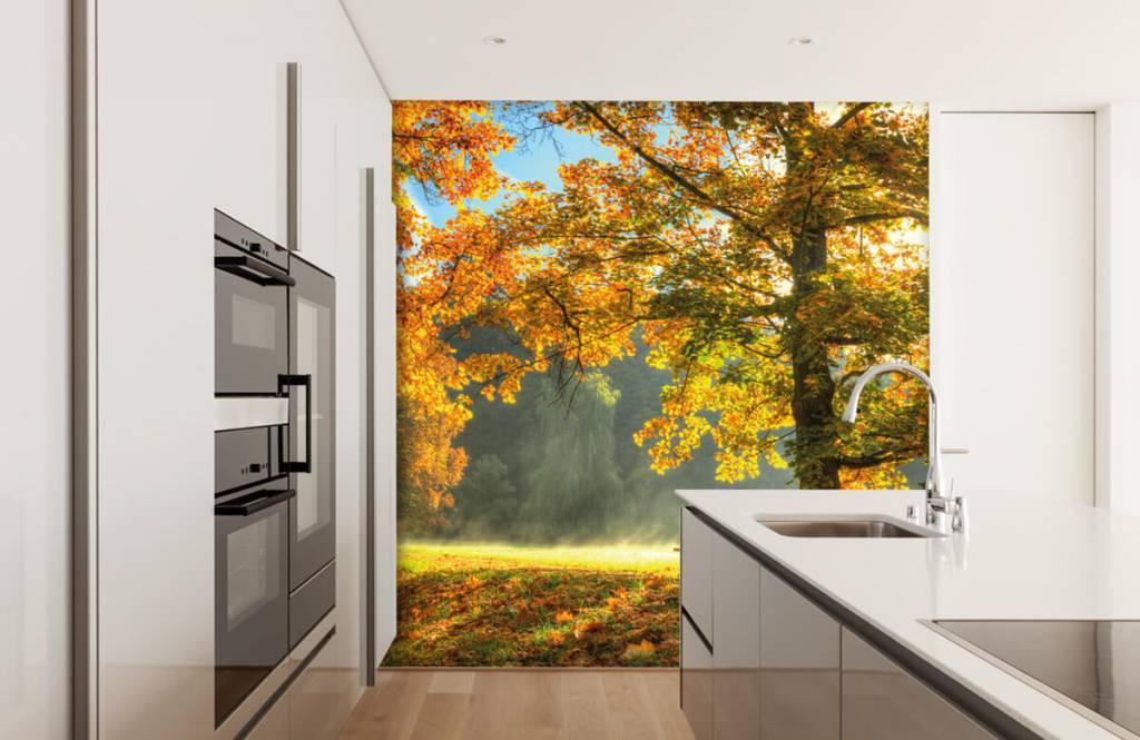 Papier peint de la forêt - Arbre aux couleurs de l'automne - Chambre à coucher 1