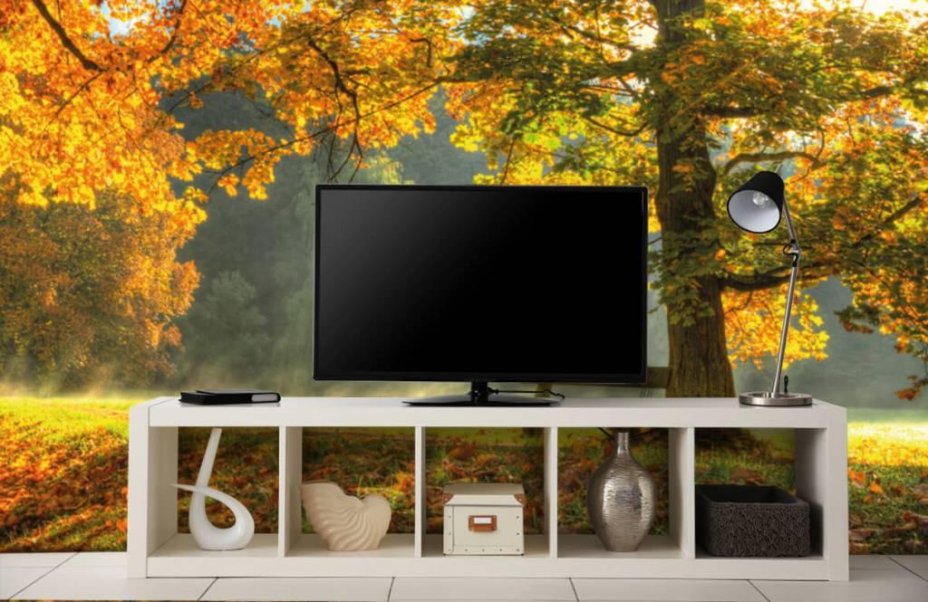 Papier peint de la forêt - Arbre aux couleurs de l'automne - Chambre à coucher 2