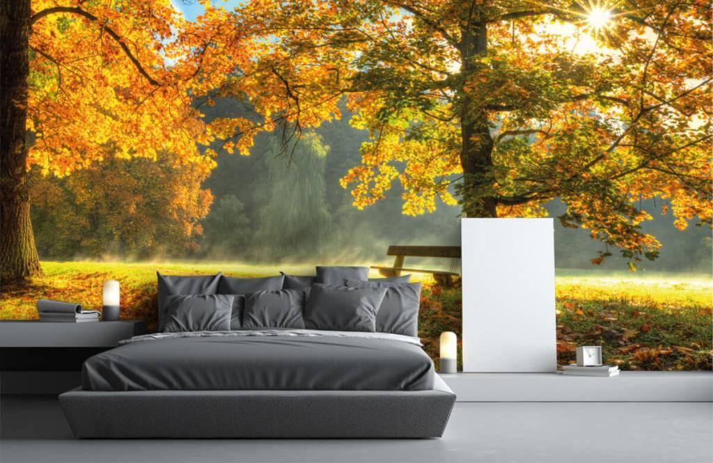 Papier peint de la forêt - Arbre aux couleurs de l'automne - Chambre à coucher 3