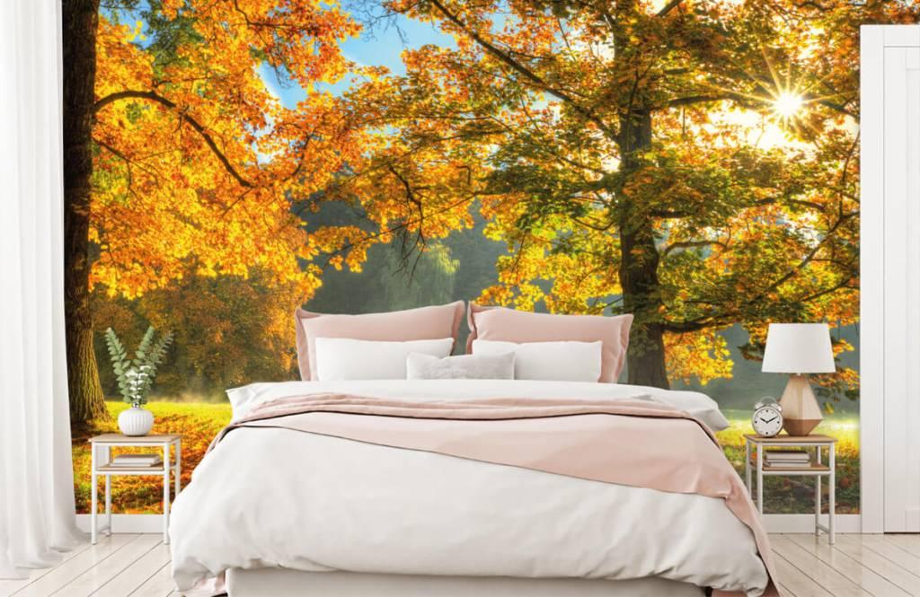 Papier peint de la forêt - Arbre aux couleurs de l'automne - Chambre à coucher 4