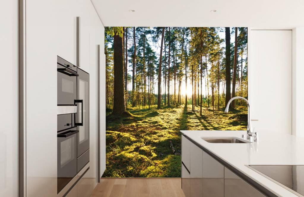 Papier peint de la forêt - Forêt de pins - Chambre à coucher 2