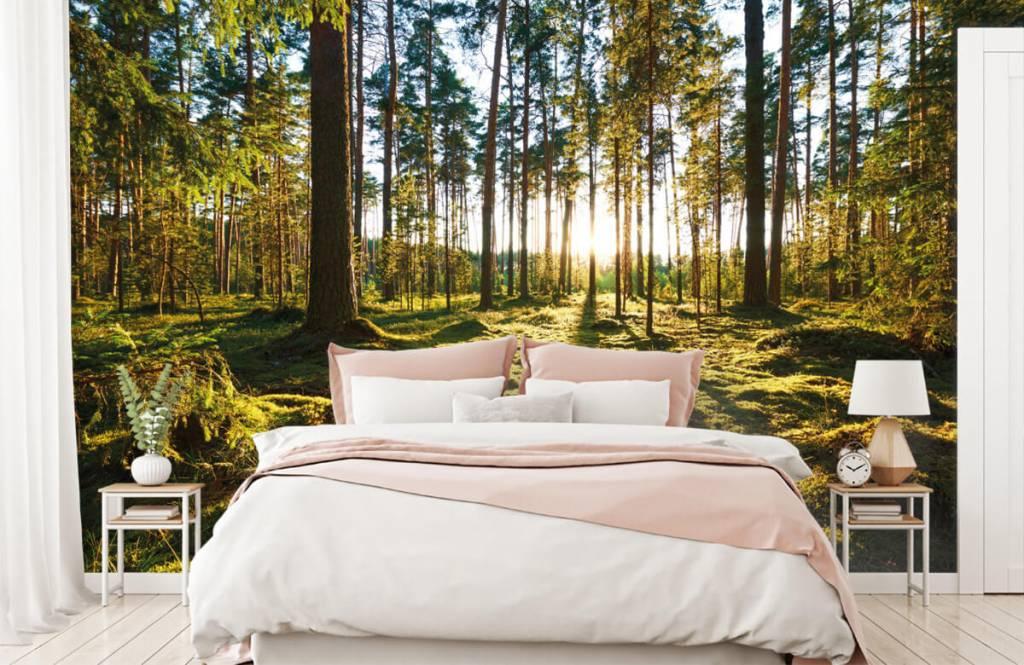 Papier peint de la forêt - Forêt de pins - Chambre à coucher 3