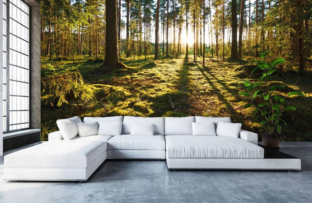 Papier peint de la forêt - Forêt de pins - Chambre à coucher 5