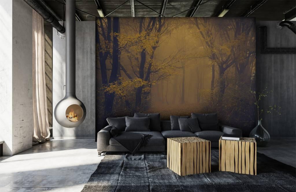Papier peint de la forêt - Forêt sombre - Chambre à coucher 1