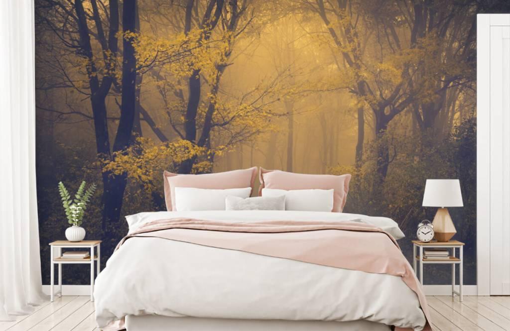 Papier peint de la forêt - Forêt sombre - Chambre à coucher 2