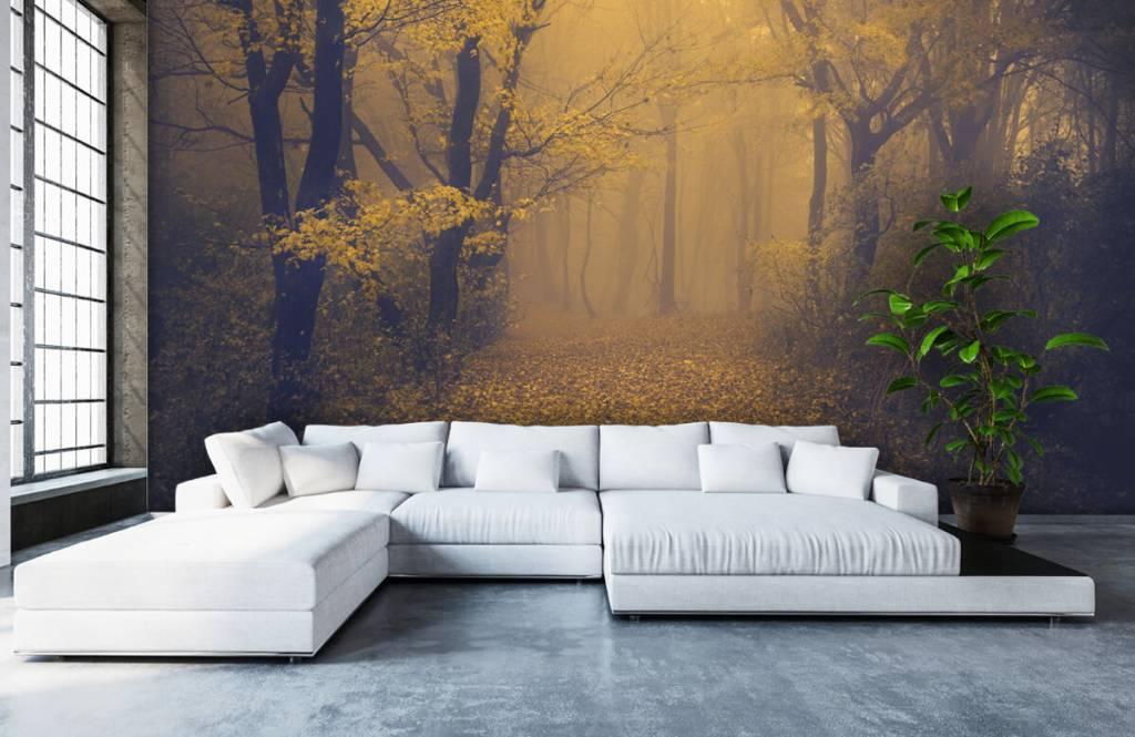 Papier peint de la forêt - Forêt sombre - Chambre à coucher 6