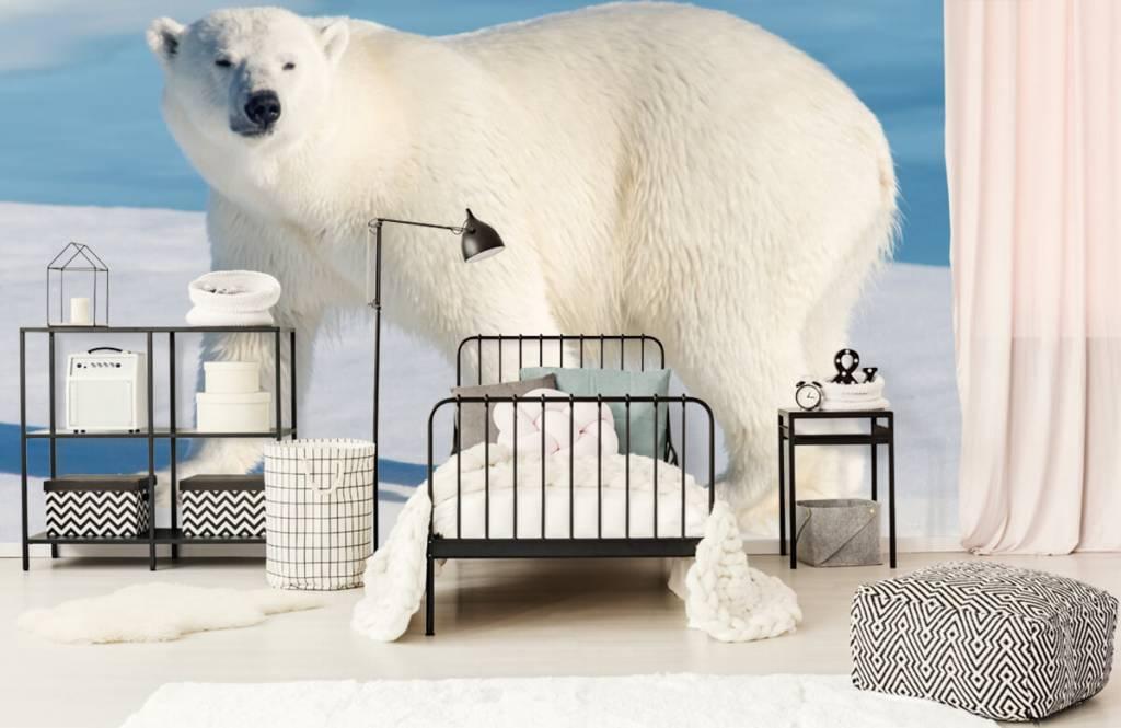 Autre - Ours polaire - Chambre d'enfants 1