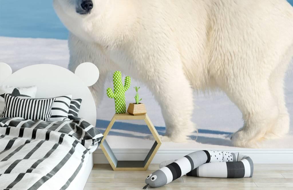 Autre - Ours polaire - Chambre d'enfants 2