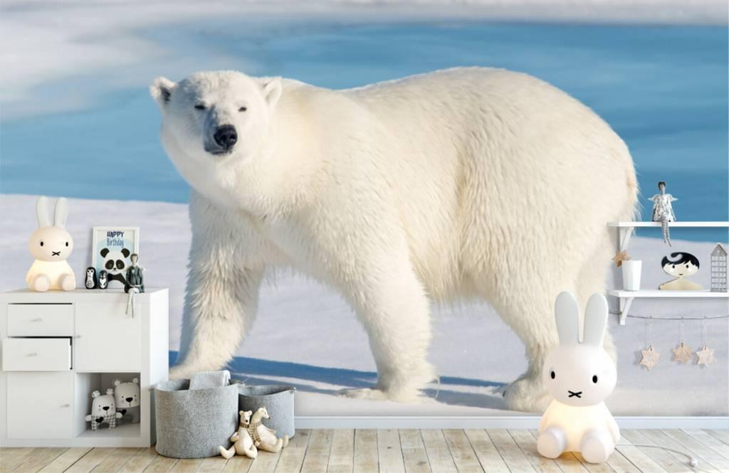 Autre - Ours polaire - Chambre d'enfants 4