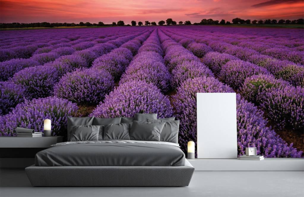 Champs fleuris - Champ de lavande - Chambre à coucher 2