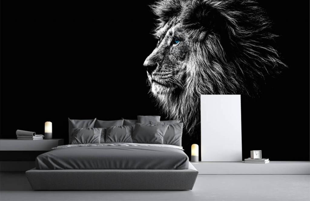 Animaux de Safari - Lion aux yeux bleus - Chambre d'adolescent 3