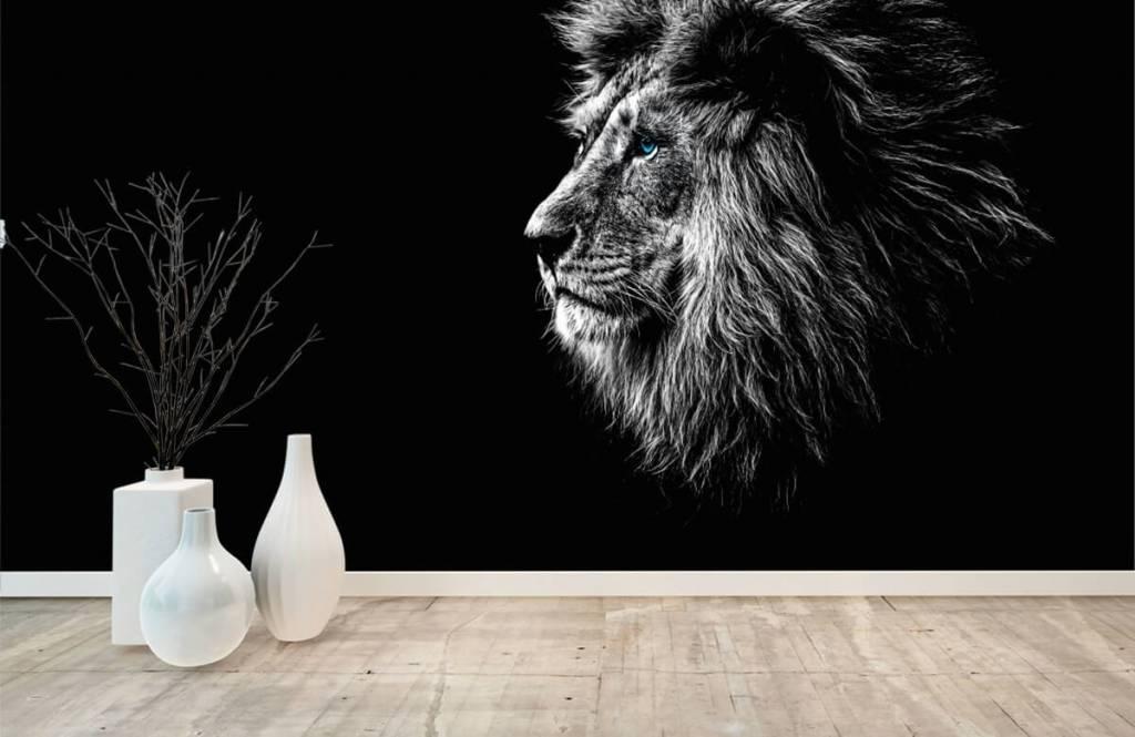 Animaux de Safari - Lion aux yeux bleus - Chambre d'adolescent 8