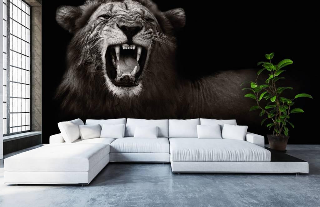 Animaux sauvages - Lionne - Chambre d'adolescent 1