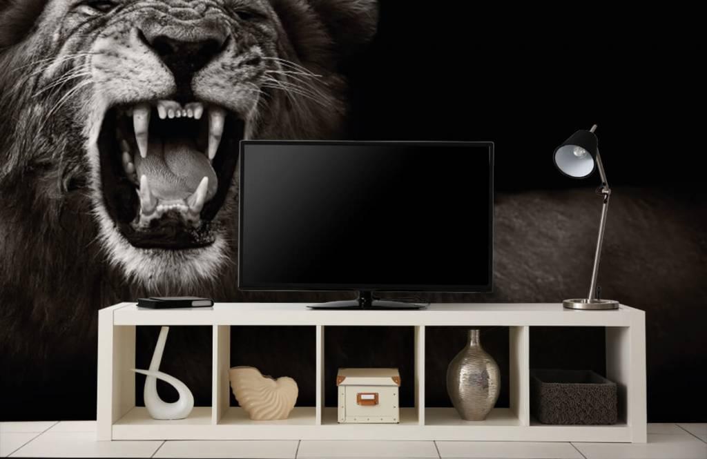 Animaux sauvages - Lionne - Chambre d'adolescent 5