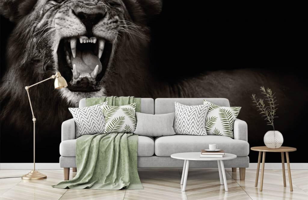 Animaux sauvages - Lionne - Chambre d'adolescent 7