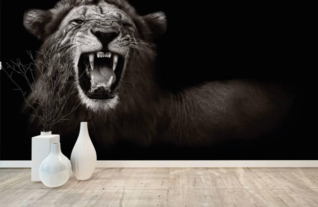 Animaux sauvages - Lionne - Chambre d'adolescent 8