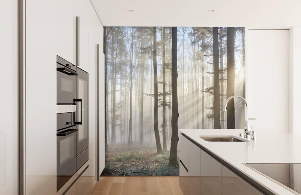 Papier peint de la forêt - Forêt brumeuse - Chambre à coucher 2