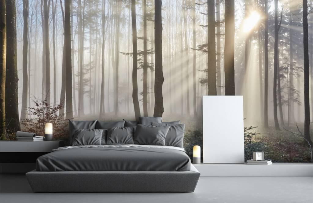 Papier peint de la forêt - Forêt brumeuse - Chambre à coucher 3